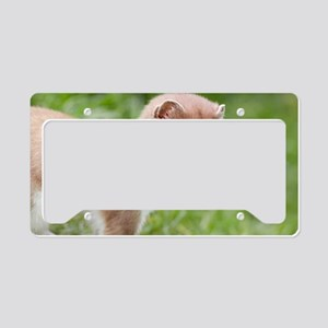 Stoat License Plate Holder
