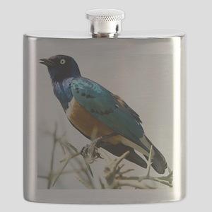 Superb starling Flask