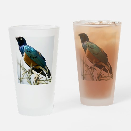 Superb starling Drinking Glass