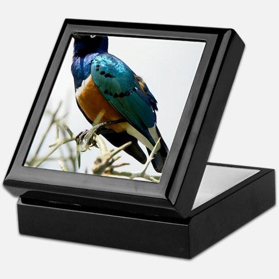 Superb starling Keepsake Box