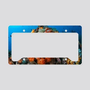 Tropical sea life License Plate Holder