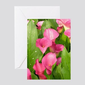 Zantedeschia 'Captain Romance' Greeting Card