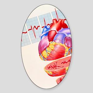 Artwork of heart Sticker (Oval)