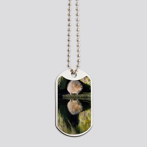 Water vole Dog Tags