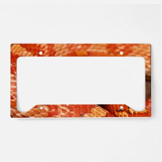Corn Snake  License Plate Holder