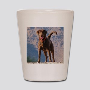 Lovable Chocolate Lab Shot Glass