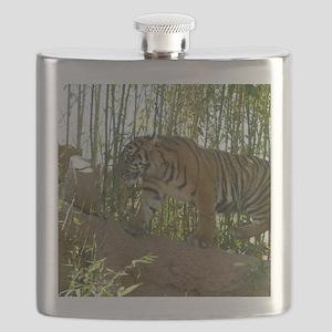 Sumatran Tiger on the prowl Flask