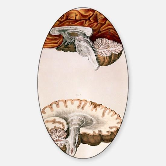 Brain Sticker (Oval)