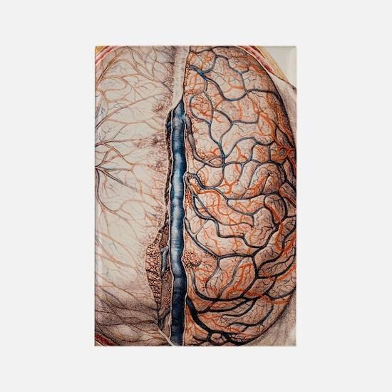 Brain meninges Rectangle Magnet