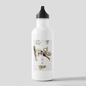 Ear anatomy Stainless Water Bottle 1.0L