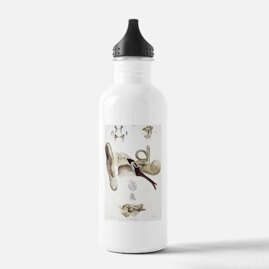 Ear anatomy Water Bottle