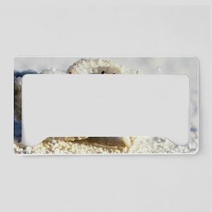 Juvenile land hermit crab License Plate Holder