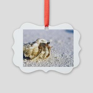 Juvenile land hermit crab Picture Ornament