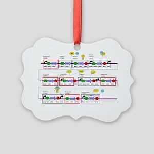 Genetic circuit diagram Picture Ornament