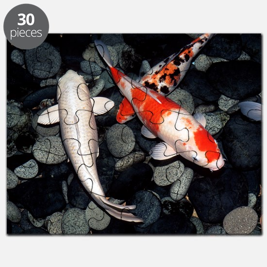 Koi carp in a pond Puzzle