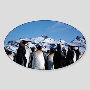 King penguins Sticker (Oval)