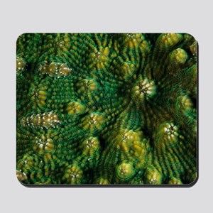 Knobby cactus coral Mousepad