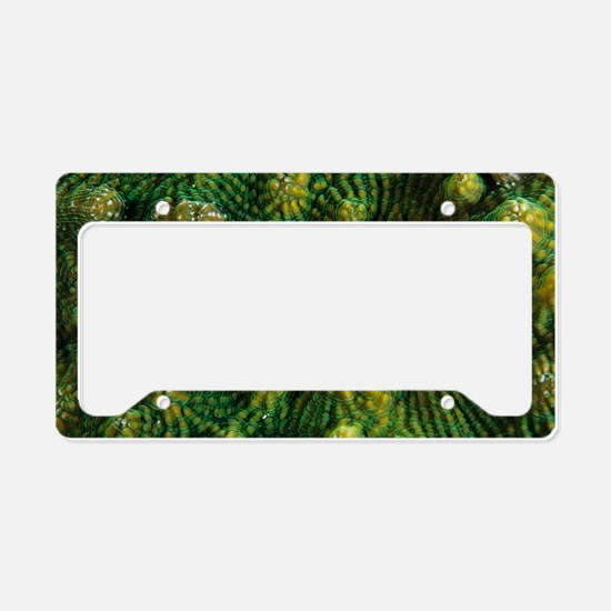 Knobby cactus coral License Plate Holder