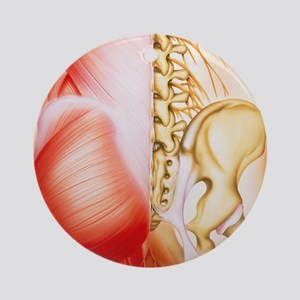 Illustration of muscles of the back Round Ornament