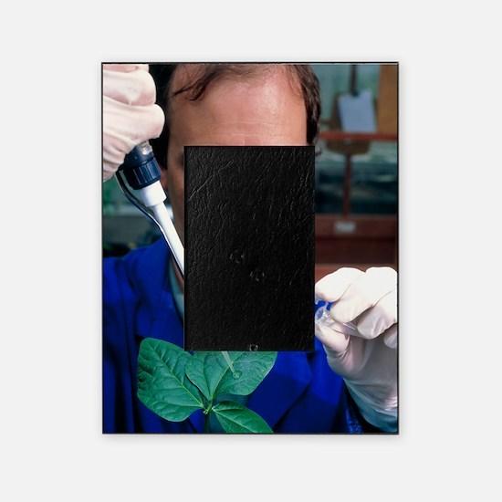 AIDS plant vaccine: researcher infec Picture Frame