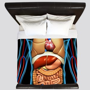 Human anatomy, artwork King Duvet