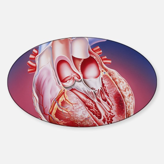 Heart after heart attack Sticker (Oval)