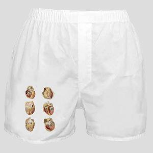 Heart anatomy, artwork Boxer Shorts