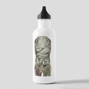 Human anatomy, artwork Stainless Water Bottle 1.0L