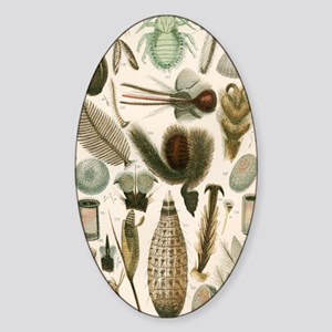 Insect microscopy, 19th century Sticker (Oval)