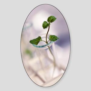 Plant biotechnology Sticker (Oval)