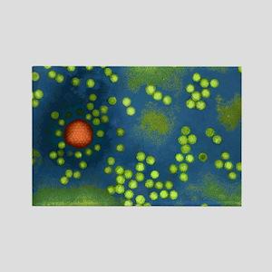 Adeno-associated virus, TEM Rectangle Magnet