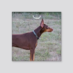 "Red Doberman Square Sticker 3"" x 3"""