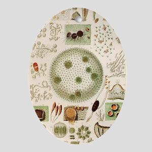Plant and fungi microscopy, 19th cen Oval Ornament