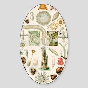 Protozoan microscopy, 19th century Sticker (Oval)