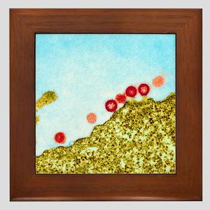 AIDS viruses budding from a cell, TEM Framed Tile