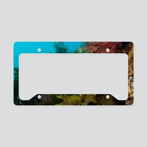Leafy sea dragon License Plate Holder