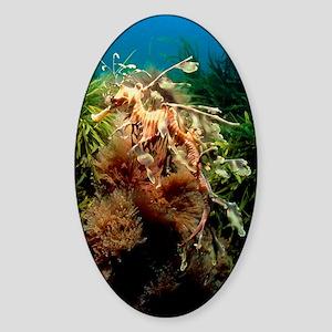 Leafy sea dragon Sticker (Oval)