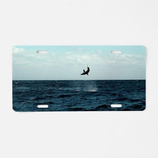 Mako shark on a fishing lin Aluminum License Plate