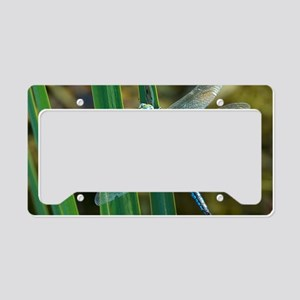 Male emperor dragonfly License Plate Holder