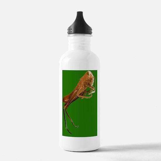 Locust, SEM Water Bottle