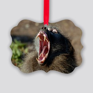 Male chacma baboon Picture Ornament