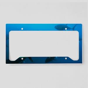 Longtail tuna fish License Plate Holder