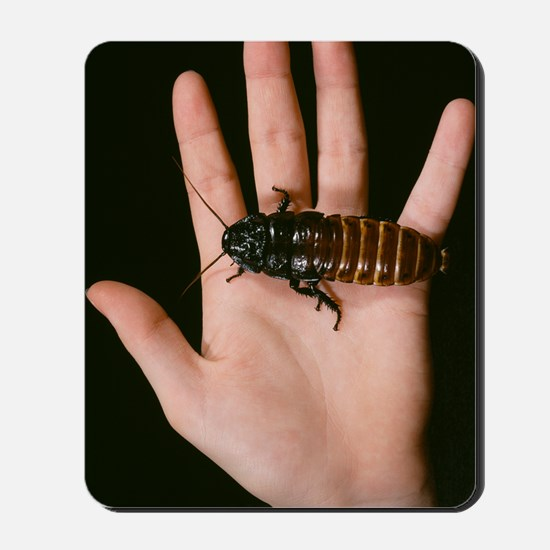 Madagascan giant hissing cockroach Mousepad