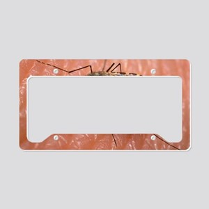 Malaria mosquito, Anopheles g License Plate Holder