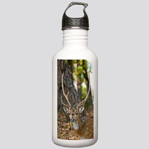 Male chital deer Stainless Water Bottle 1.0L