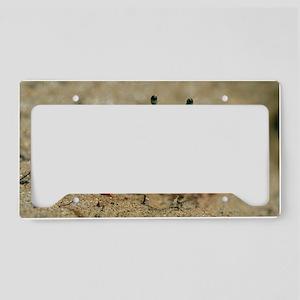 Male fiddler crab License Plate Holder