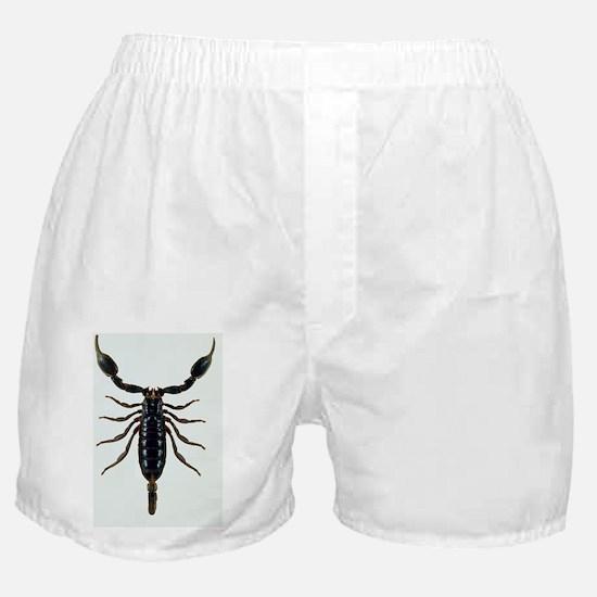 Malaysian forest scorpion Boxer Shorts