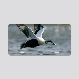 Male common eider duck Aluminum License Plate