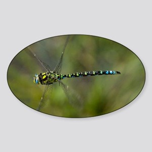 Male southern hawker dragonfly Sticker (Oval)