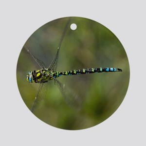 Male southern hawker dragonfly Round Ornament